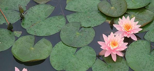洋湖湿地公园大型花卉艺术展
