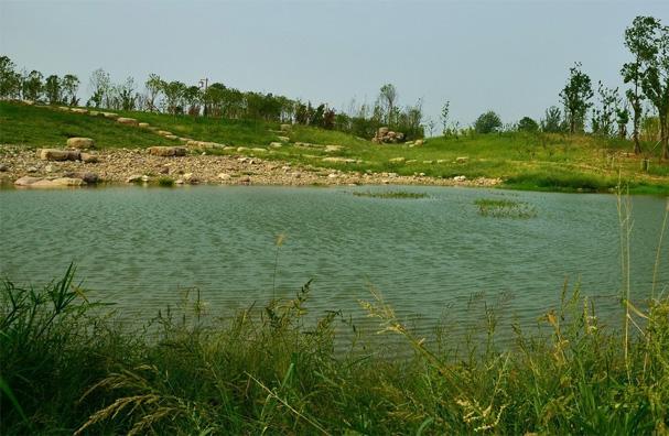 洋湖湿地公园